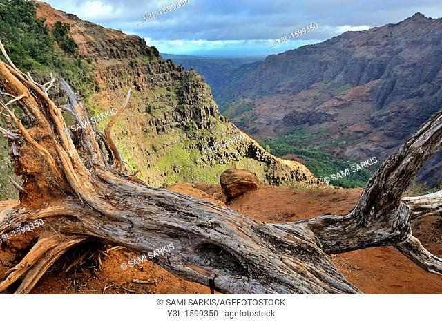 Dead tree and Waimea canyon, Kauai Island, Hawaii Islands, USA