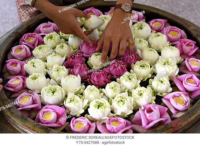 Bowl with flowers as a morning blessing, Angkor Borei hotel, Siem Reap, Cambodia, South Esat Asia