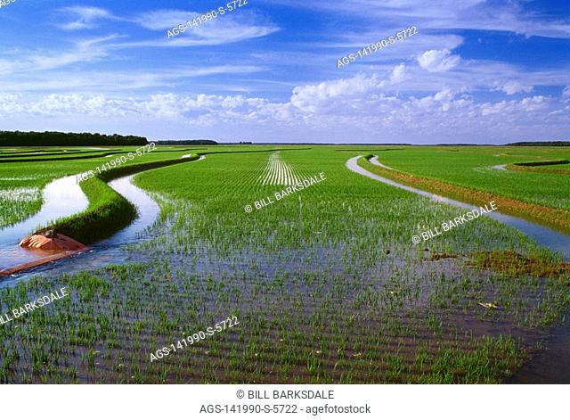 Agriculture - A field of early growth rice plants during the flooding stage / Arkansas, USA