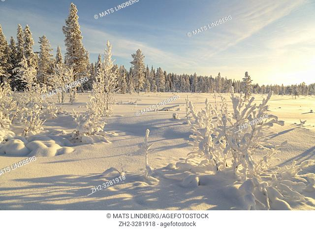 Landscape in winter season, nice warm afternoon light with clear blue sky, Gällivare county, Swedish Lapland, Sweden
