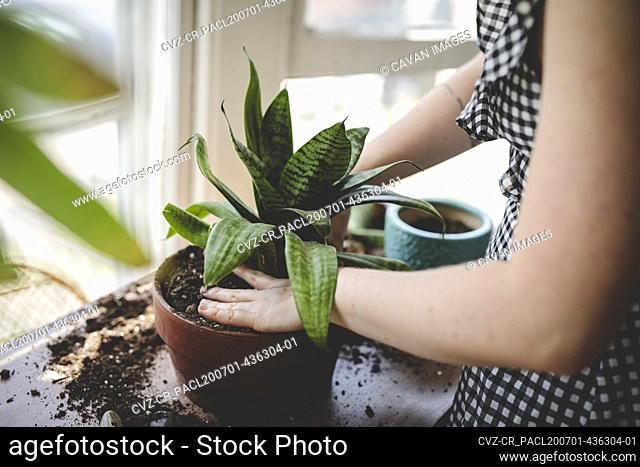 Young woman repots a plant and works her hands into the soil
