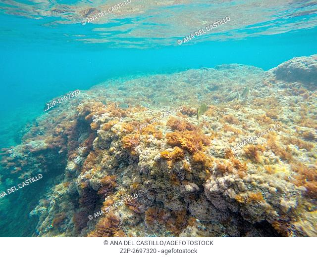 Sea bed Las Rotas nature reserve Denia Alicante Spain. Underwater image with algas
