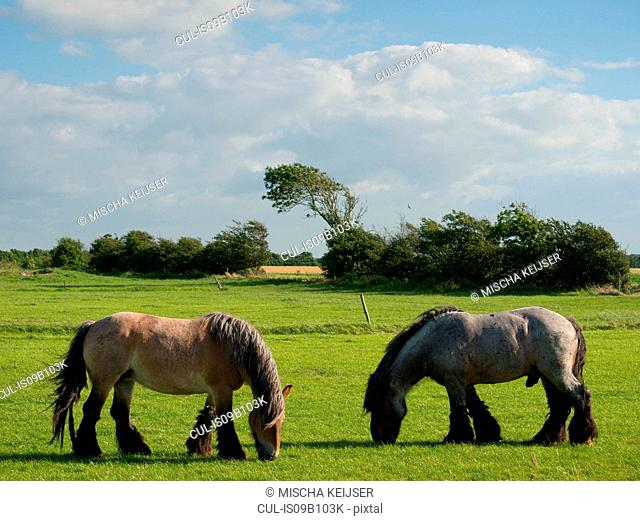 Two horses grazing in field