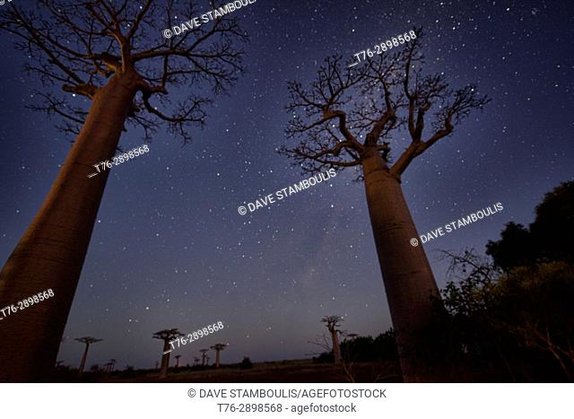 Night on the Avenue of the Baobabs, Madagascar