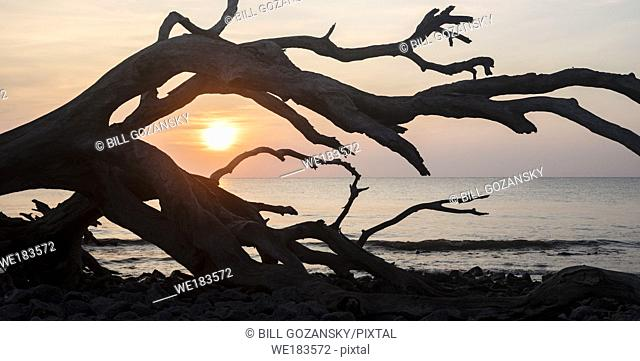 Sunrise on Driftwood Beach - Jekyll Island, Georgia, United States