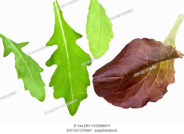 leafs of salads isolated on white