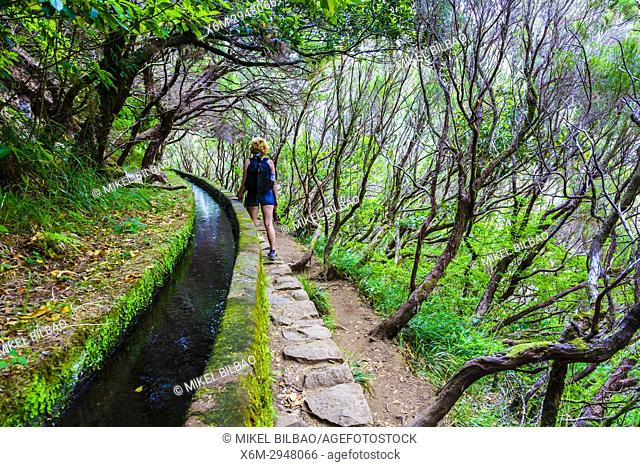 Woman hiking in a laurisilva forest. Levada das 25 Fontes route. Madeira, Portugal, Europe