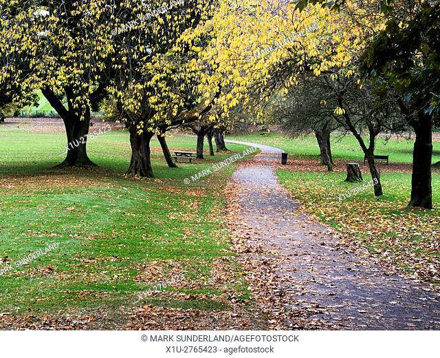 Footpath through Aireville Park in Autumn Skipton North Yorkshire England