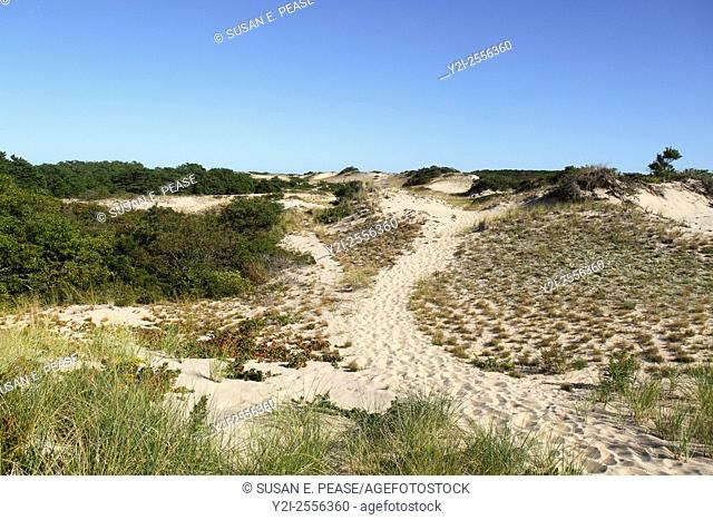 Dunes, Truro, Cape Cod National Seashore, Massachusetts, United States, North America