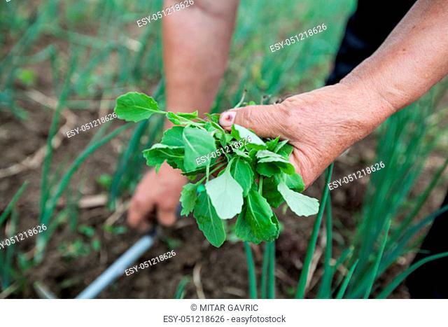 Female Farmers Hand Planting Small Plant In Organic Garden