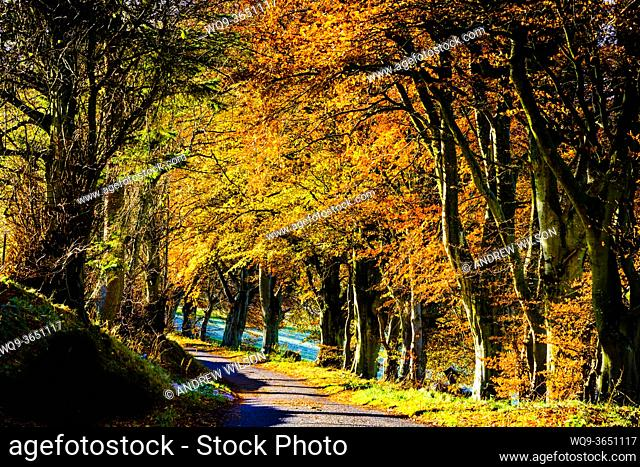 Sunshine on trees in autumn colour in the Scottish Borders