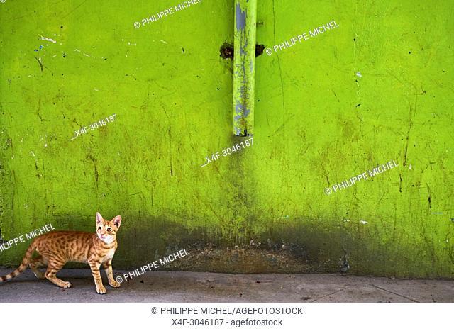 Kenya, Lamu island, Lamu town, Unesco world heritage, street cats