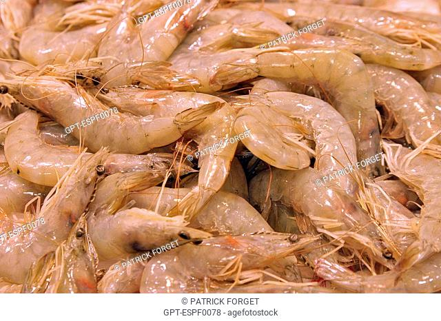 STAND OF BIG SHRIMP SCAMPI FOR PAELLA DISHES AT THE MARKET 'LA BOQUERIA', CULINARY TEMPLE BECOME ONE OF THE BIGGEST MARKETS IN EUROPE, 'EL RAVAL' NEIGHBORHOOD