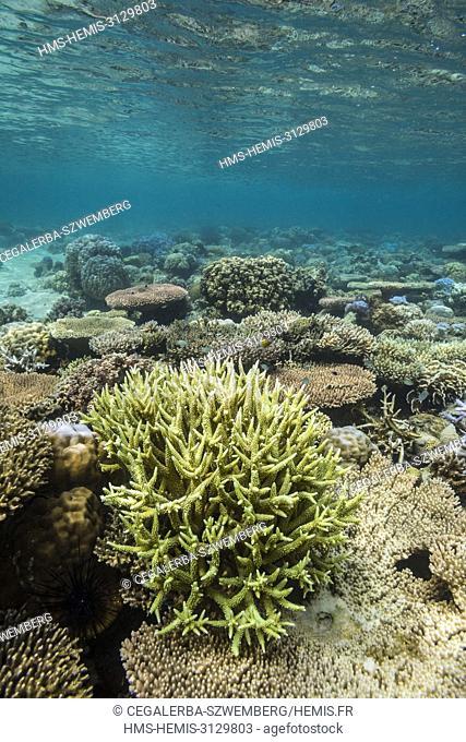 Philippines, Palawan, Taytay Bay, Isla Blanca, coral reef