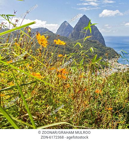 The Pitons Through The Flowers St. Lucia West Indi