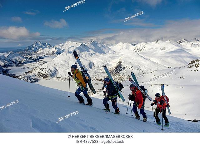 Mountain guide leads a rope team of ski mountaineers on Blåtinden, Svolvaer, Austvågøy, Lofoten, Norway