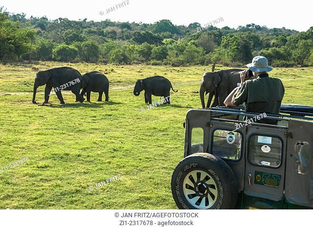 Tourists in jeeps looking at elephants in minneriya national park, sri lanka