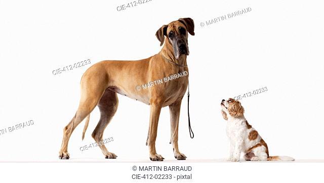 Small dog looking at bigger dog