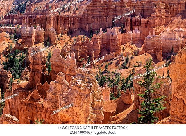 USA, UTAH, BRYCE CANYON NATIONAL PARK, QUEEN'S GARDEN, HOODOO ROCK FORMATIONS
