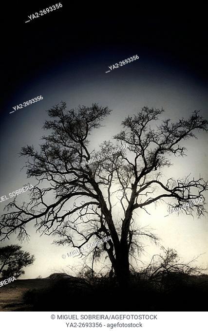 Arid Tree