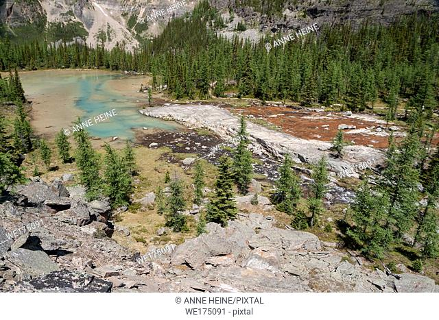 Water color. Lake O`Hara area in Yoho National Park, British Columbia, Canada