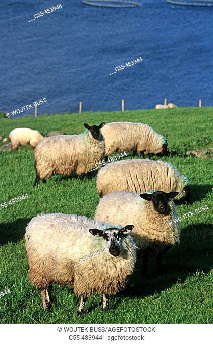 Animals. Ireland