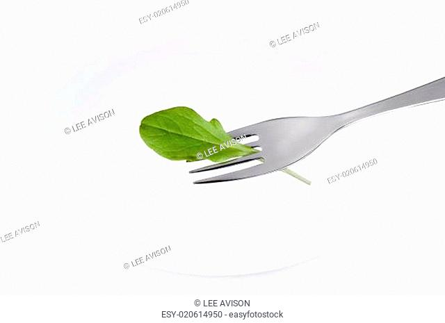 lettuce leaf and plate isolated on white