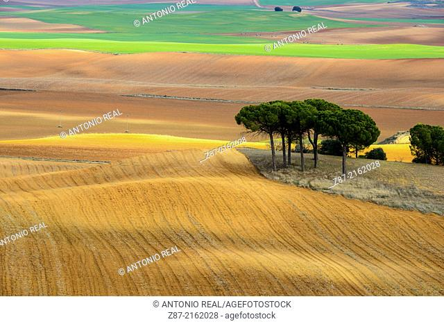 Grain field and cloud shadows, Villar de Cañas, Cuenca province, Castilla-La Mancha, Spain