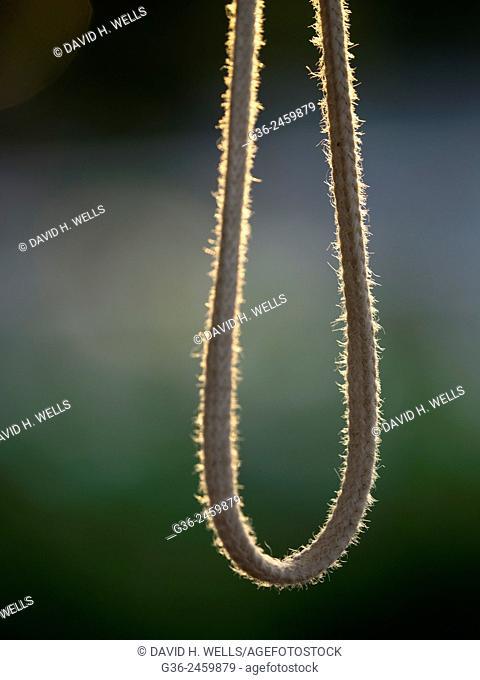 Hanging rope, Mysore, Karnataka, India