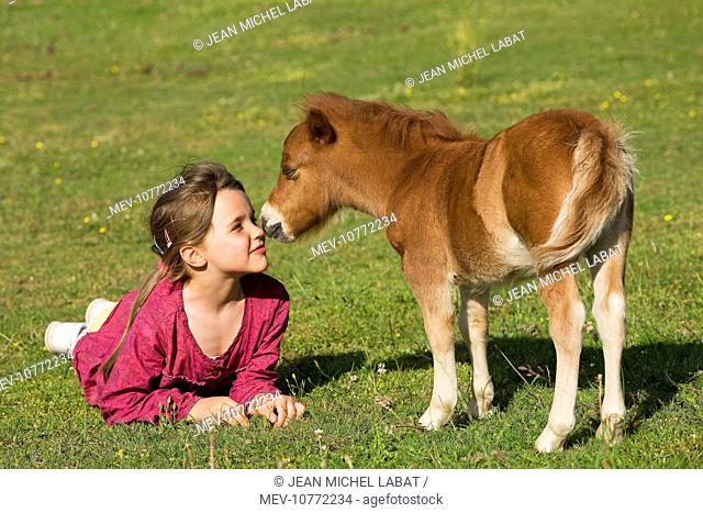Shetland Pony - young girl face to face with foal