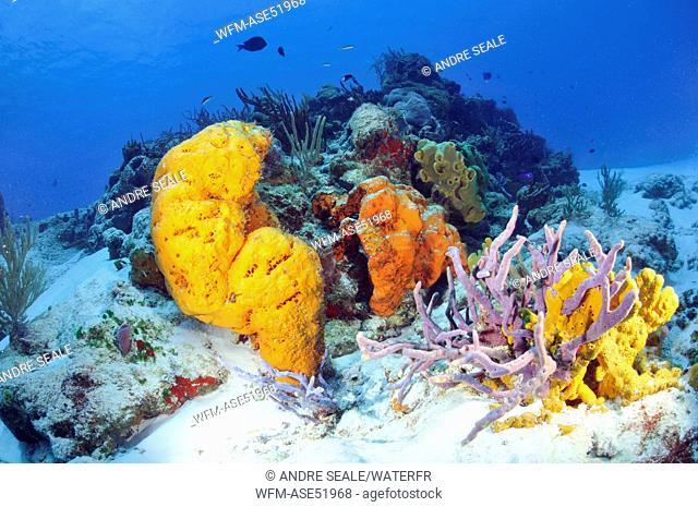 Caribbean Coral Reef, Cozumel, Caribbean Sea, Mexico