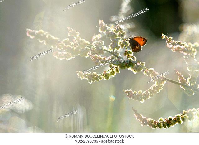 Butterfly day against a spring morning in the Rhône-Alpes region ( France )
