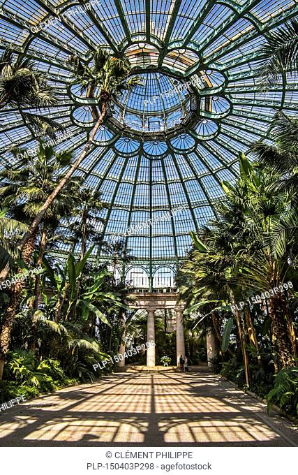 Palm trees in the Jardin d'hiver / Winter Garden at the Royal Greenhouses of Laeken in Art Nouveau style, designed by Alphonse Balat in the park of the Royal...