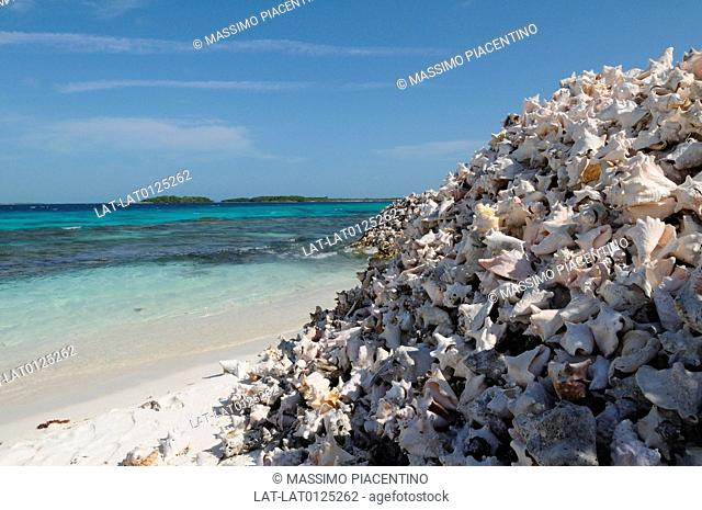 Conch shells are a valuable commodity harvested from the sea around the islands such as Crasqui Island,one of the many islands that make up the archipelago of...