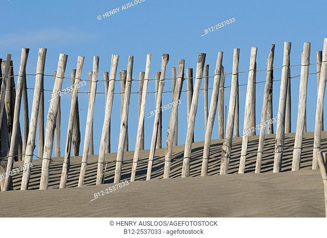 Sand and dunes stabilization, Camargue, France