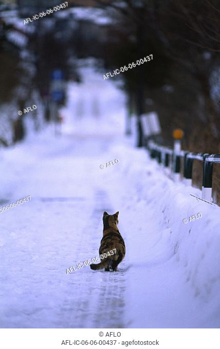 Back view of a cat on a snowy road