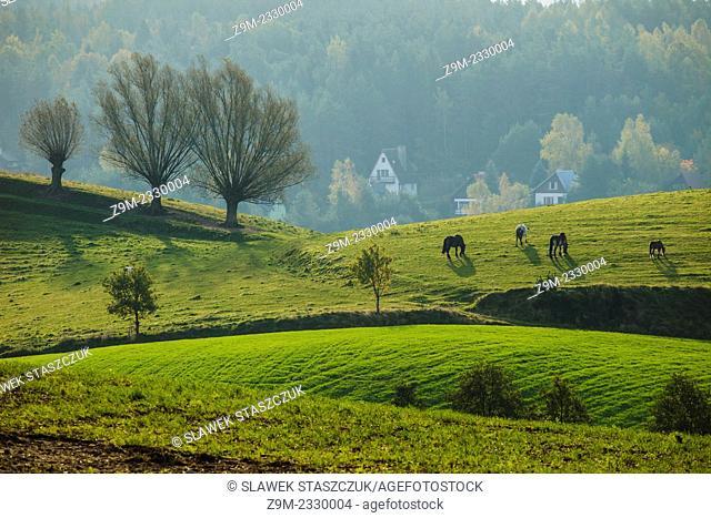 Early morning in Kashubian Landscape Park near Ramleje, pomorskie province, Poland