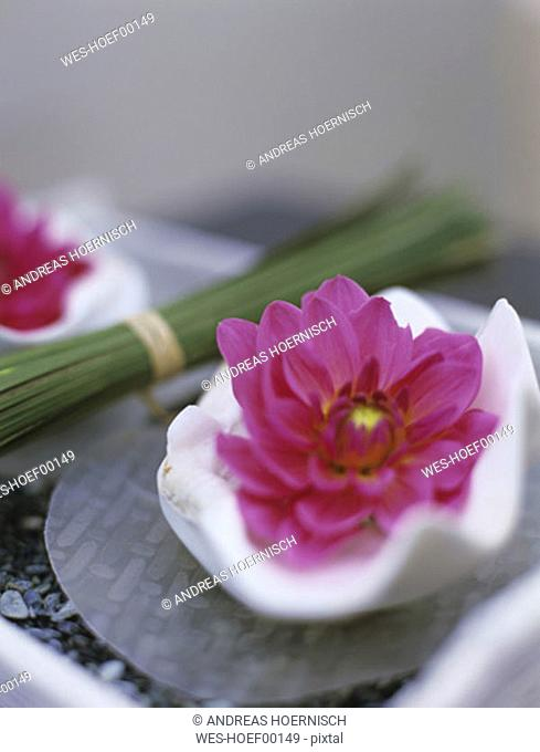 Pink dahlias and bunch of grass in tray, close-up