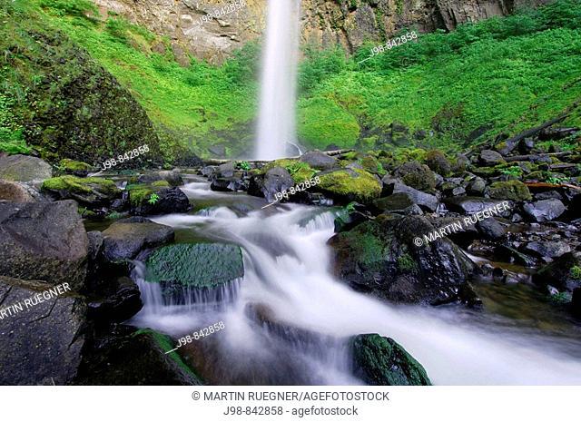 Brook with Elowah Falls John Yeon State Park, Columbia River Gorge National Scenic Area, Multnomah County, Oregon, USA, America