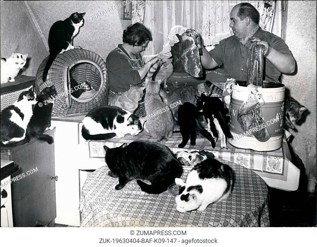 Apr. 04, 1963 - The Cat-mother of Cologne: More than 30 cats have sanctuary in a little lodgings by the cat-mother of Cologne Mrs. Elizabeth Sattler