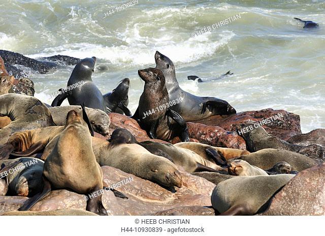 Africa, Cape Cross, Namibia, Seal Colony, Seals, animals, Skeleton Coast, beach, laying, mammal, ocean, sea lion, animal, sunbathing, tide, waves
