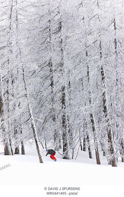 A snowboarder riding through a forest emerges from the snow covered trees