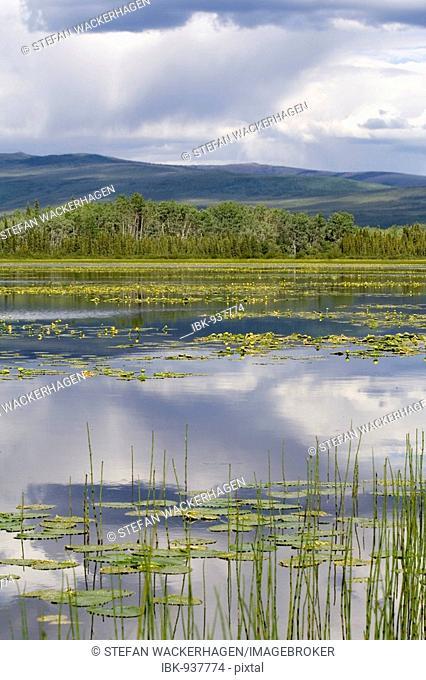 Yellow waterlilies and reflection of the sky in Gravel Lake, North Klondike Highway, Yukon Territory, Canada, North America