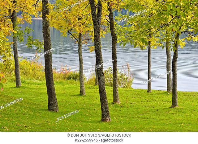Parkland trees at the edge of Simon Lake, Greater Sudbury, Ontario, Canada