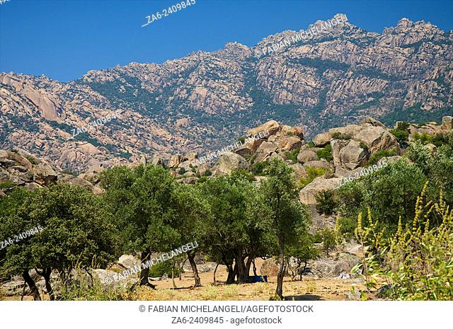 Olive grove in the village of Kapikiri at the foot of Mt Latmos on the shore of Lake Bafa in southwestern Turkey