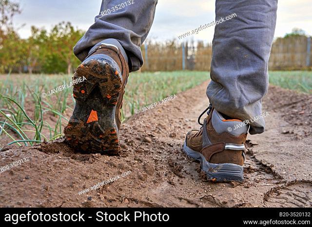 Farmer in an onion field, Agricultural field, Calahorra, La Rioja, Spain, Europe