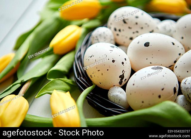Beautiful yellow tulips with dotted quail and chicken eggs in nest on white wooden background. Spring and Easter holiday concept with copy space