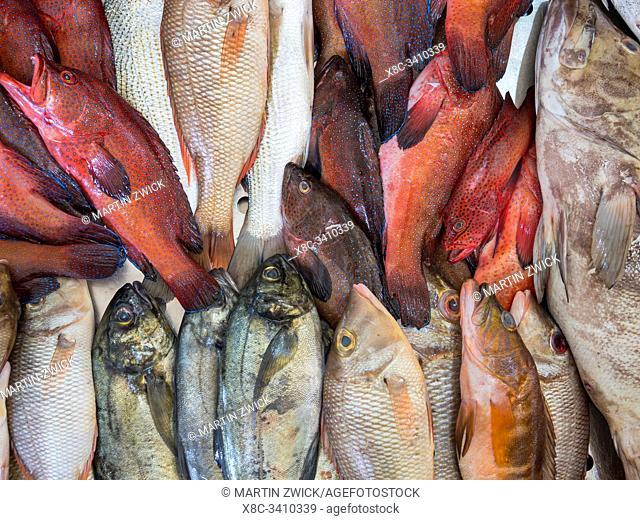 Fish market in Mercado Municipal di Praia in Plato. The capital Praia on the island of Santiago (Ilha de Santiago), Cape Verde in the equatorial atlantic