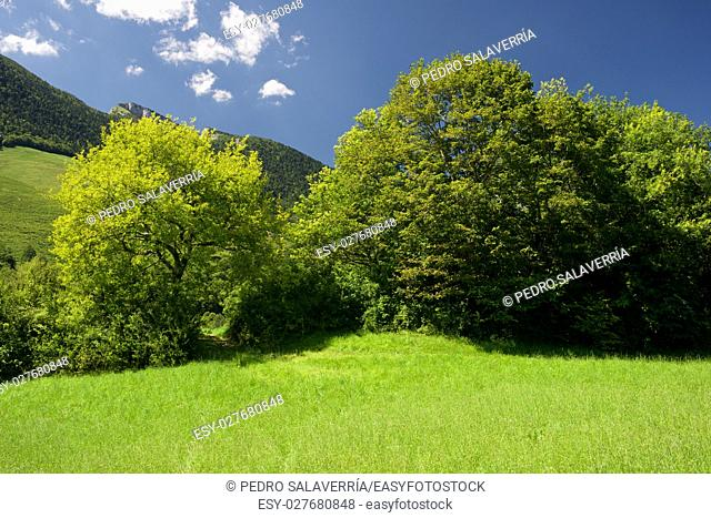 Mountain and meadows in Aspe Valley, France