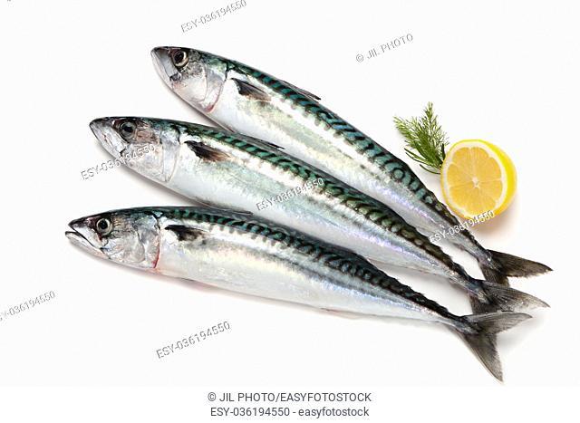 Fresh mackerel fishes on white background